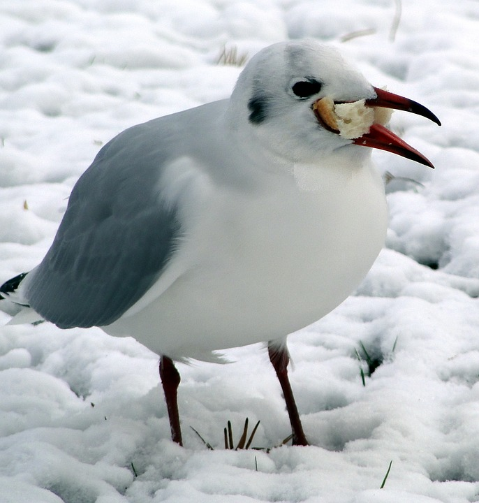 self-destructive cravings bird